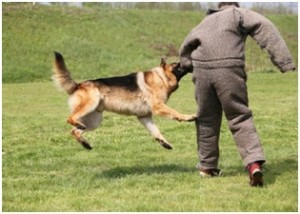Dog Attack Lawsuit